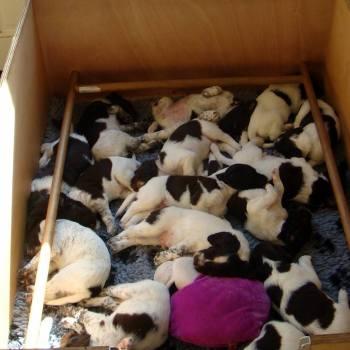 pupkes b en c nest