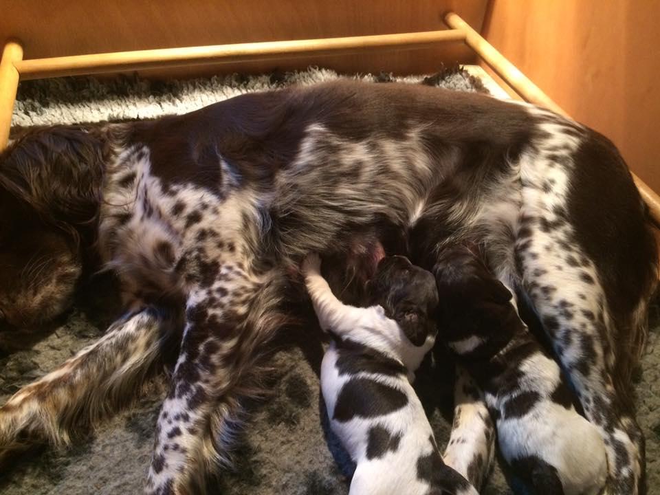 andes pups 2 weken oud